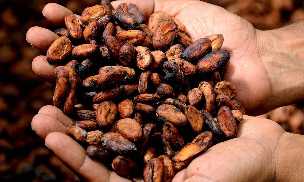 Kakaobohnen, magnesium und Schokolade