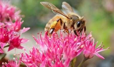 Biene klein 1024x753 1