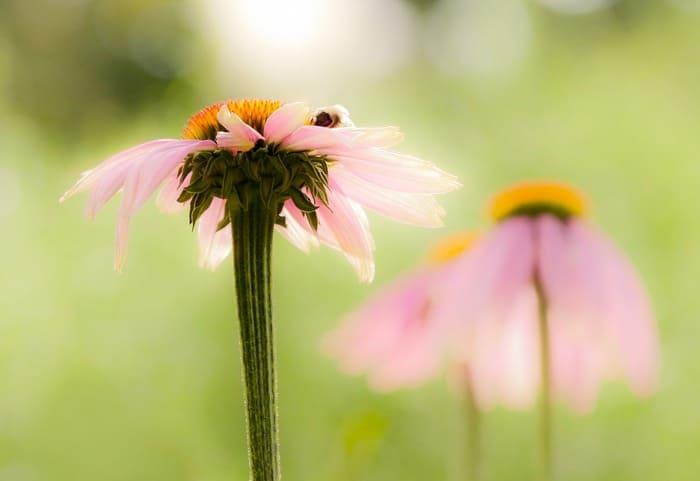 flower 620010 1920 1