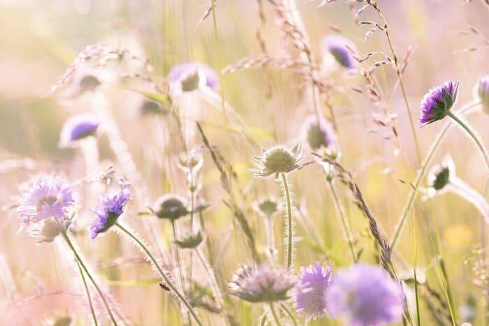 wildflowers 1406846 1920 1